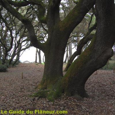 Au bois de la Chaize