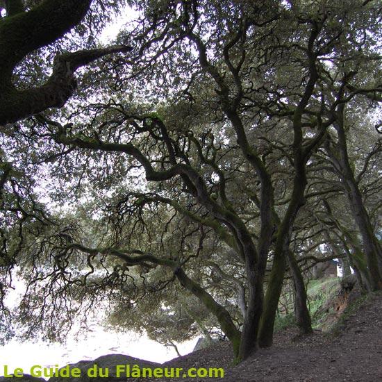 Paysage au bois de la Chaize