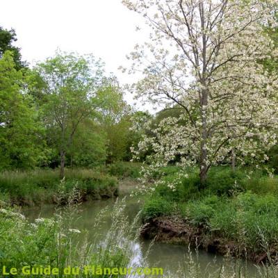 Un acacia en fleur sur les bords de l'Aradanavy