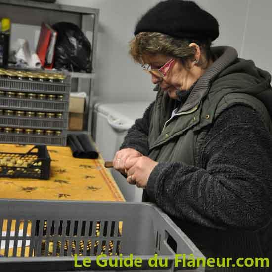 Le châtaigner en terroir du Limousin - Haute-Vienne