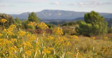Tourisme solidaire dans l'Aude