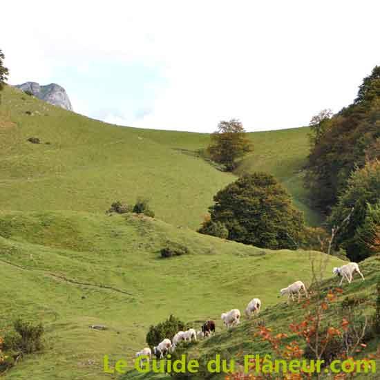 Randonnée pédestre à Campan - Hautes-Pyrénées