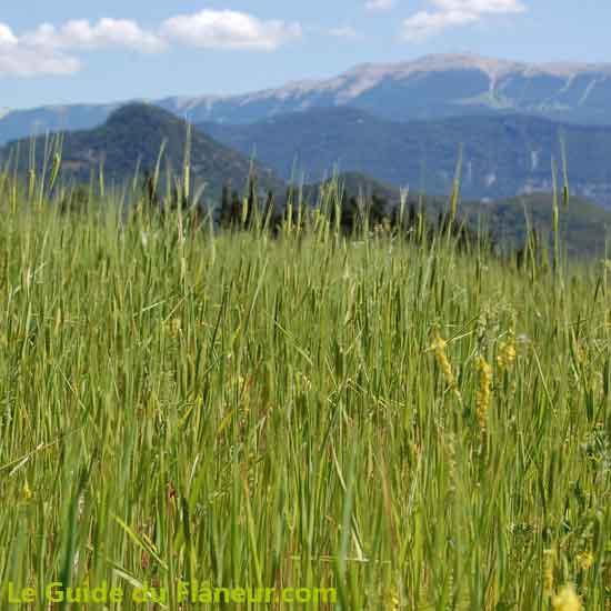 Céréales Bio à Beauvoisin - Drôme