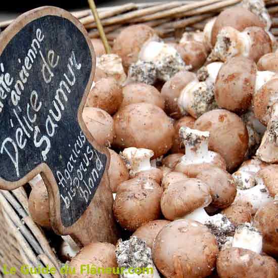 Les champignons de Montsoreau