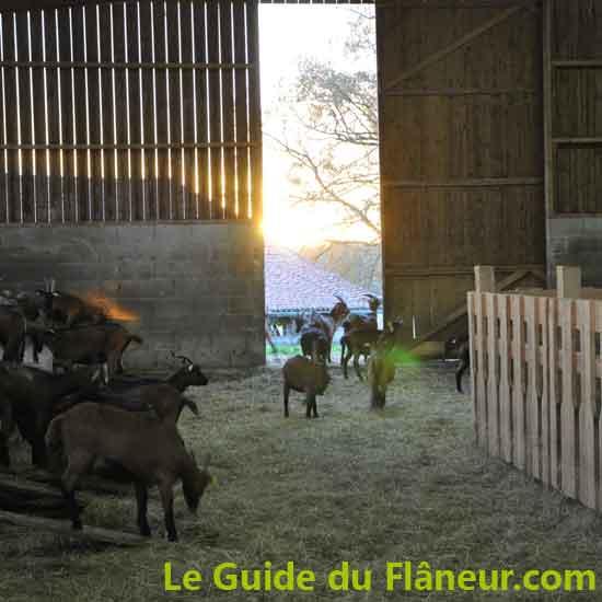 Producteurs locaux - Eleveur de chèvres - Gorre - Haute-Vienne