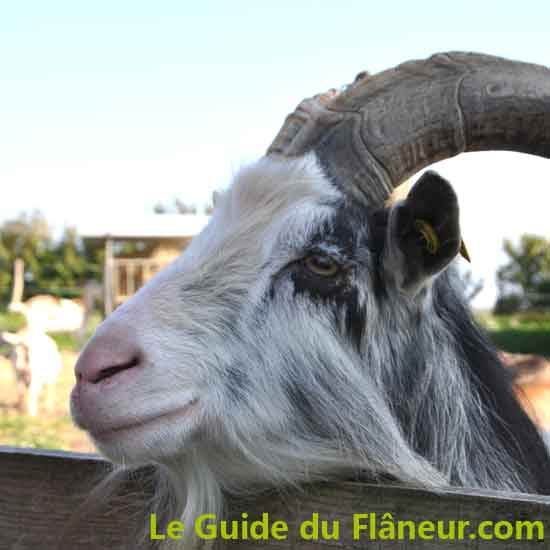 La Chèvrerie de la baie à Trégennec