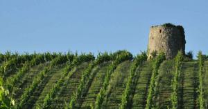 Dominik Benz créateur de vins