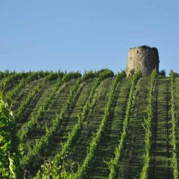 Dominik Benz créateur vins