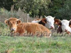 Elevage veau biologiques