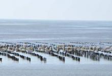 Estuaire vilaine 1