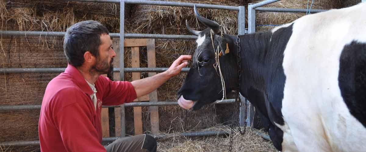 La ferme fromagère du Kleuz