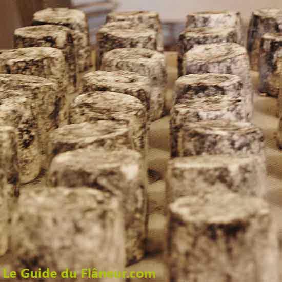 Les fromages à la cendre