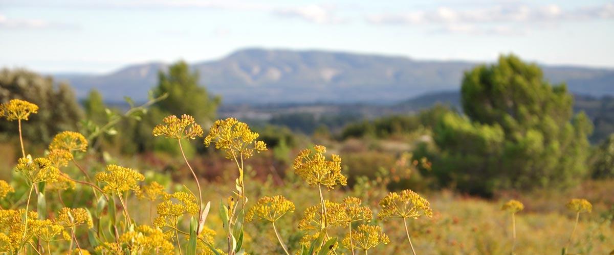 Le guide du tourisme solidaire dans l'Aude
