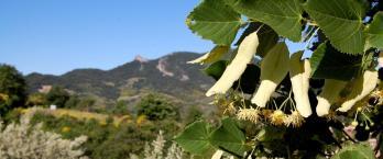 Guide du tourisme solidaire en Rhône Alpes
