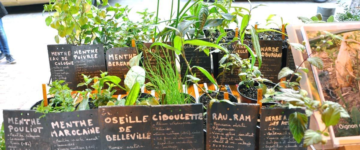 Initiatives - L jardin de Tantugou