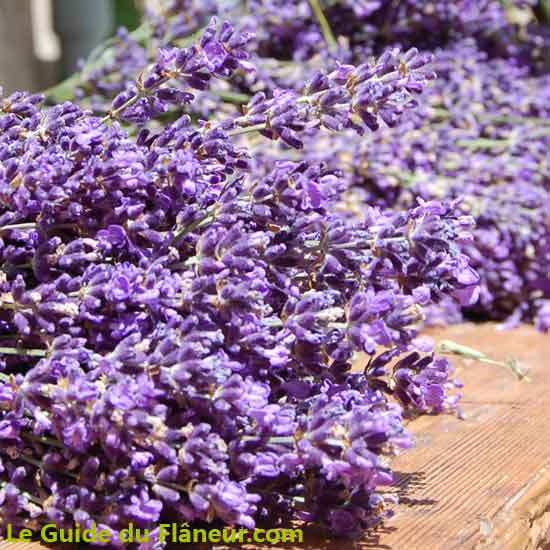 Aroma plantes à sault