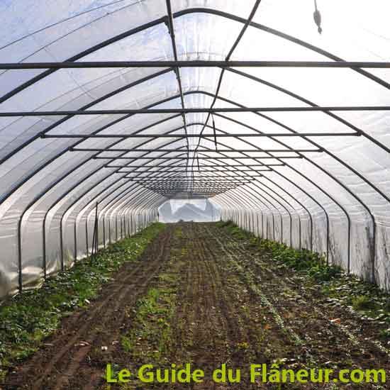 Producteur en Maraîchage - Champagnac-la-Rivière - Haute-Vienne