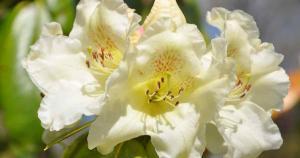 Parc floral de Combrit