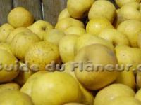 Pommes clochard