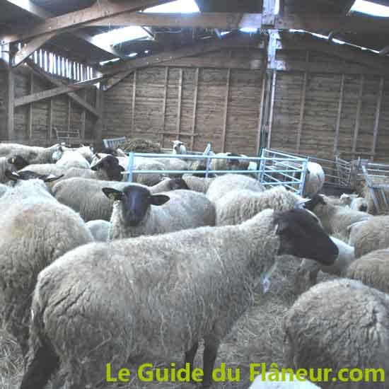 Producteurs locaux - La ferme du Vincin à Vannes - Morbihan
