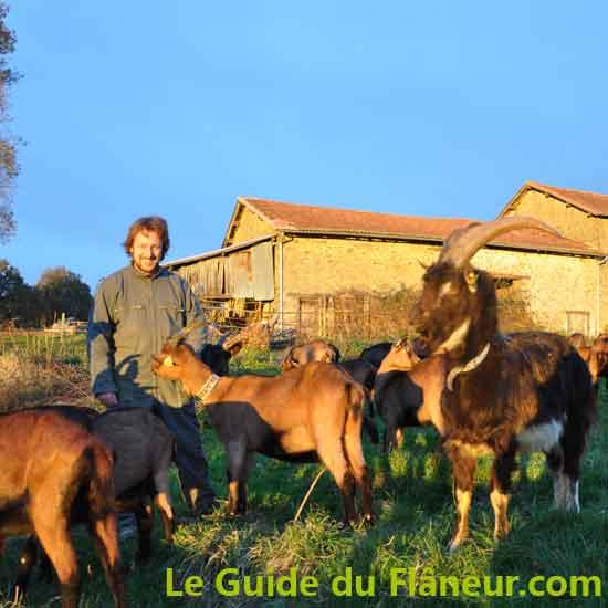 Elevage de chèvres - Gorre - Haute-Vienne