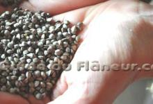 Producteur farine sarrasin