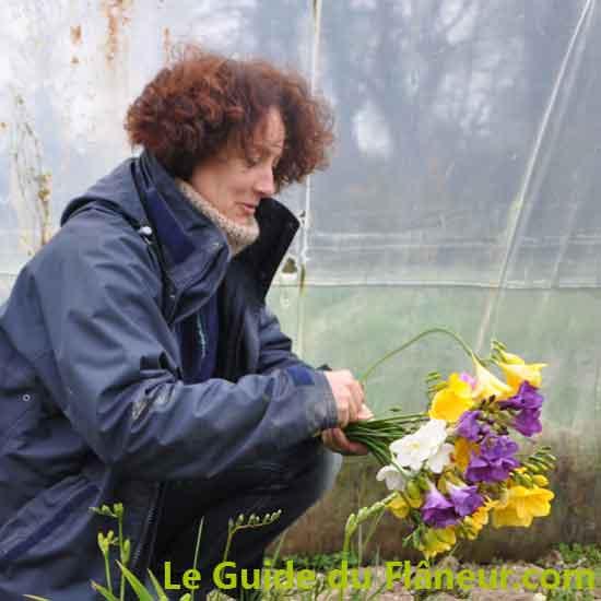 Production de fleurs coupées