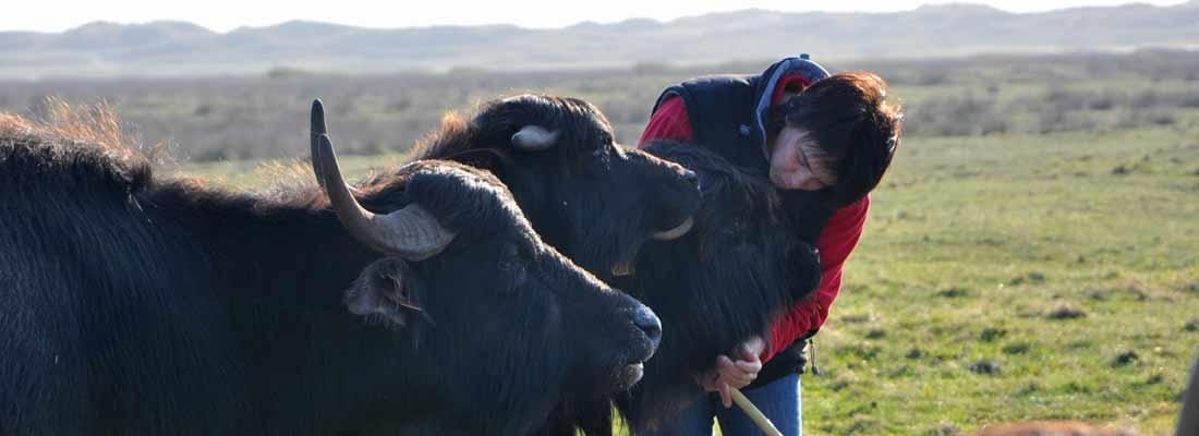 Lait de chèvre et de bufflonne - Finistère