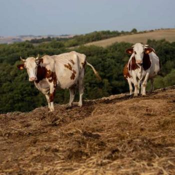 Le producteur laitier