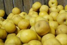 Producteur pommes beceleuf