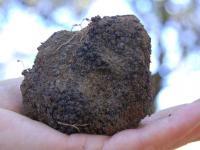 Producteur truffes