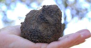 Producteur de truffes