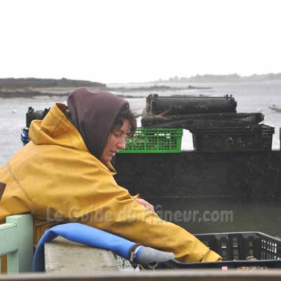 Producteurs d'huitres - Morbihan