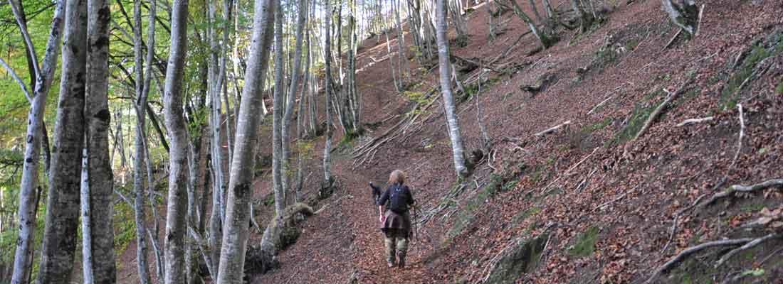 Campan - Hautes-Pyrénées