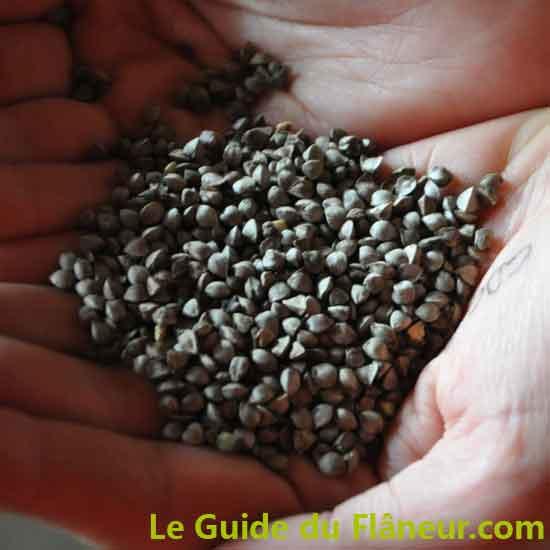 Producteurs de farine de sarrasin - Finistère