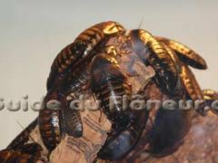 Tourisme insectarium 1