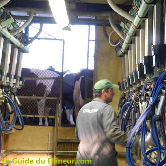 L'élevage laitiers de la Grande Dennerie