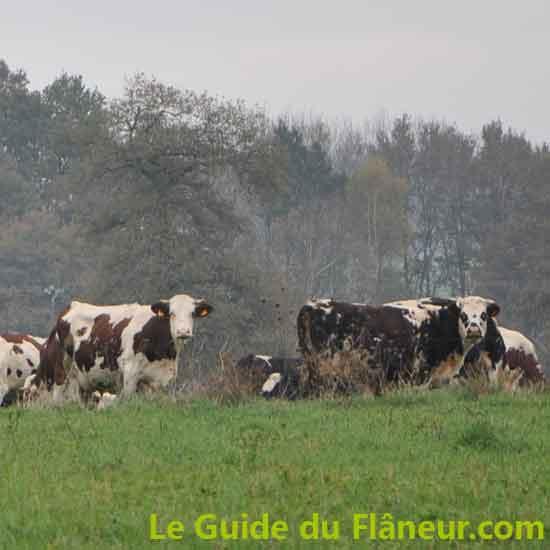 Elevage laitier - Flavignac - Haute-Vienne