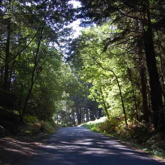 Végétation de la Montagne Noire