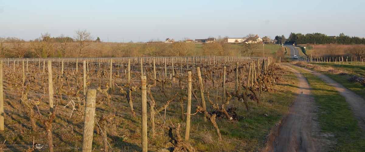 Le vin des côteaux du Layon