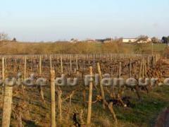 Vin coteaux layon bio
