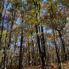 Forêt de chênes pédonculés