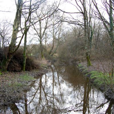 Un canal dans le marais