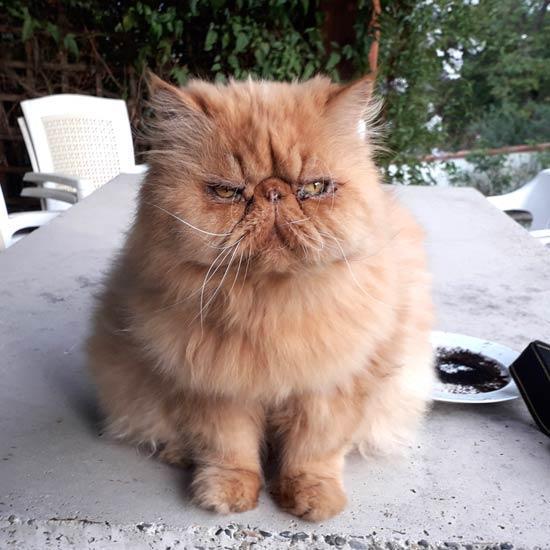 Le chat de Montgaillard