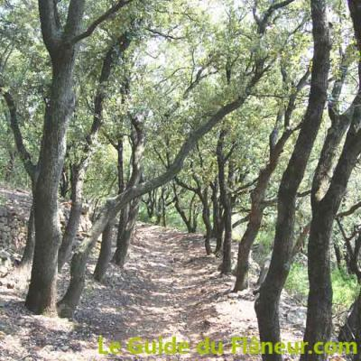Chemin bois chene