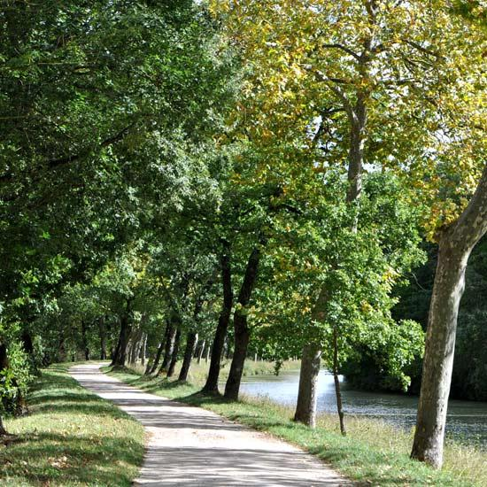 Chemin du canal du midi