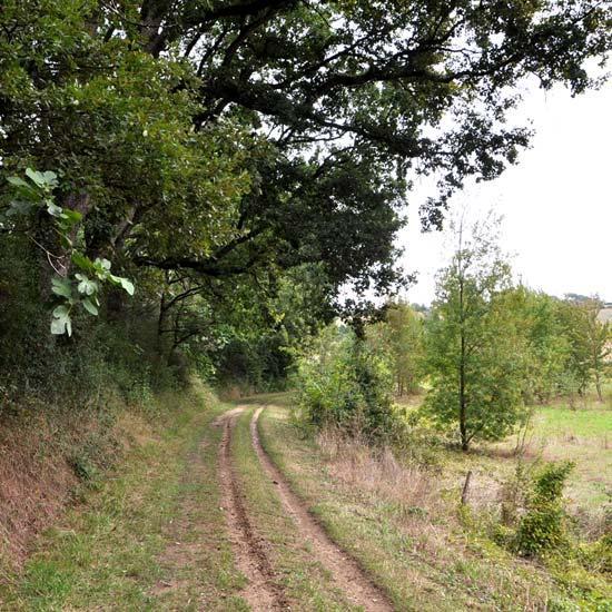 Chemin de Montgiscard
