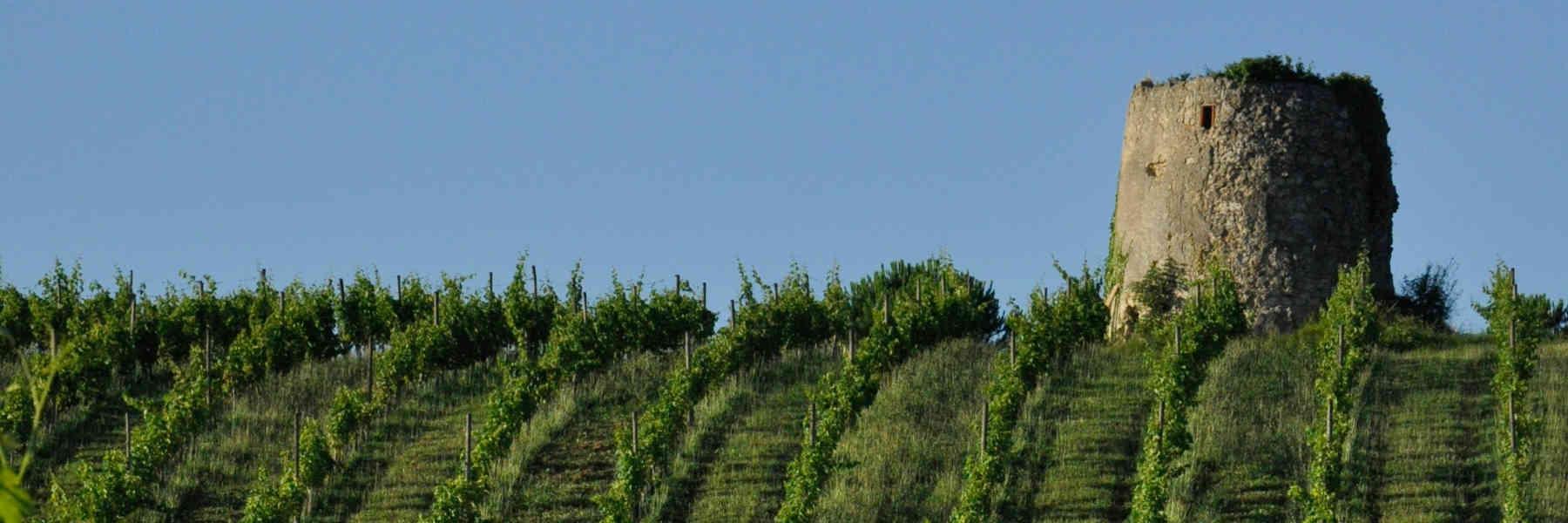 Dominik Benz producteur et créateur de vins