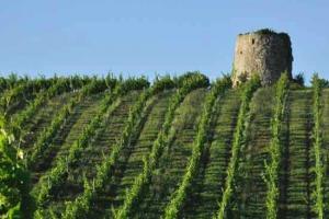 Les vignes de Dominik benz