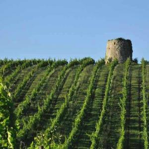 Dominik benz vins producteurs locaux